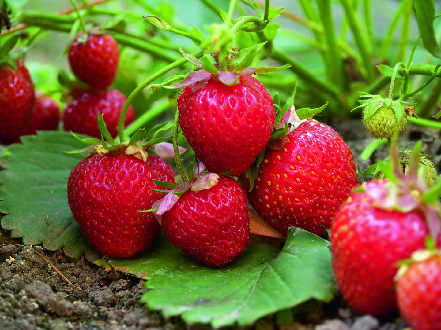 Kitchen Garden Design Strawberries