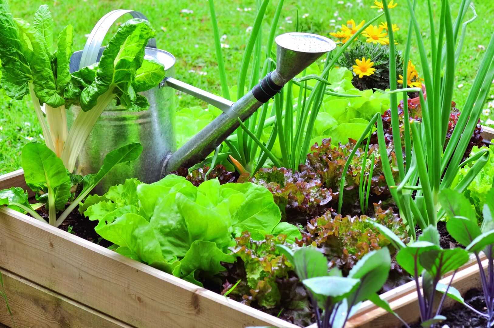 Kitchen Garden Design Beds and Watering Can