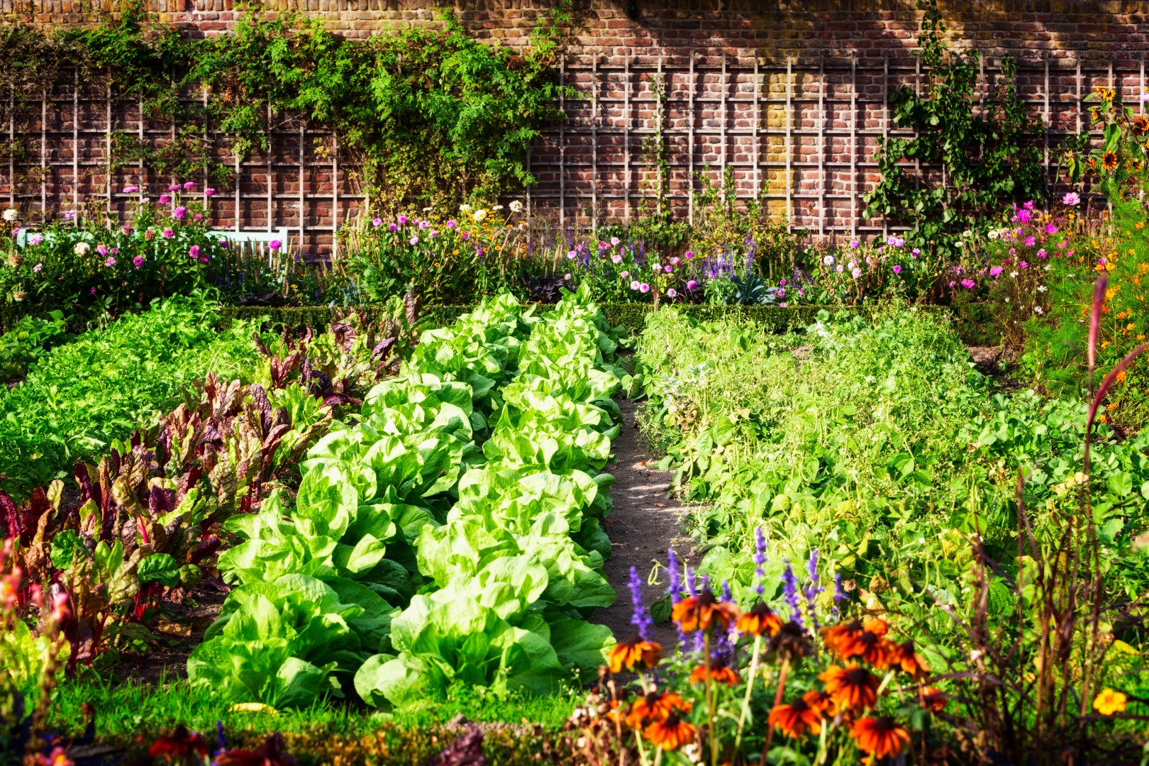 Kitchen Garden Design Vegetables