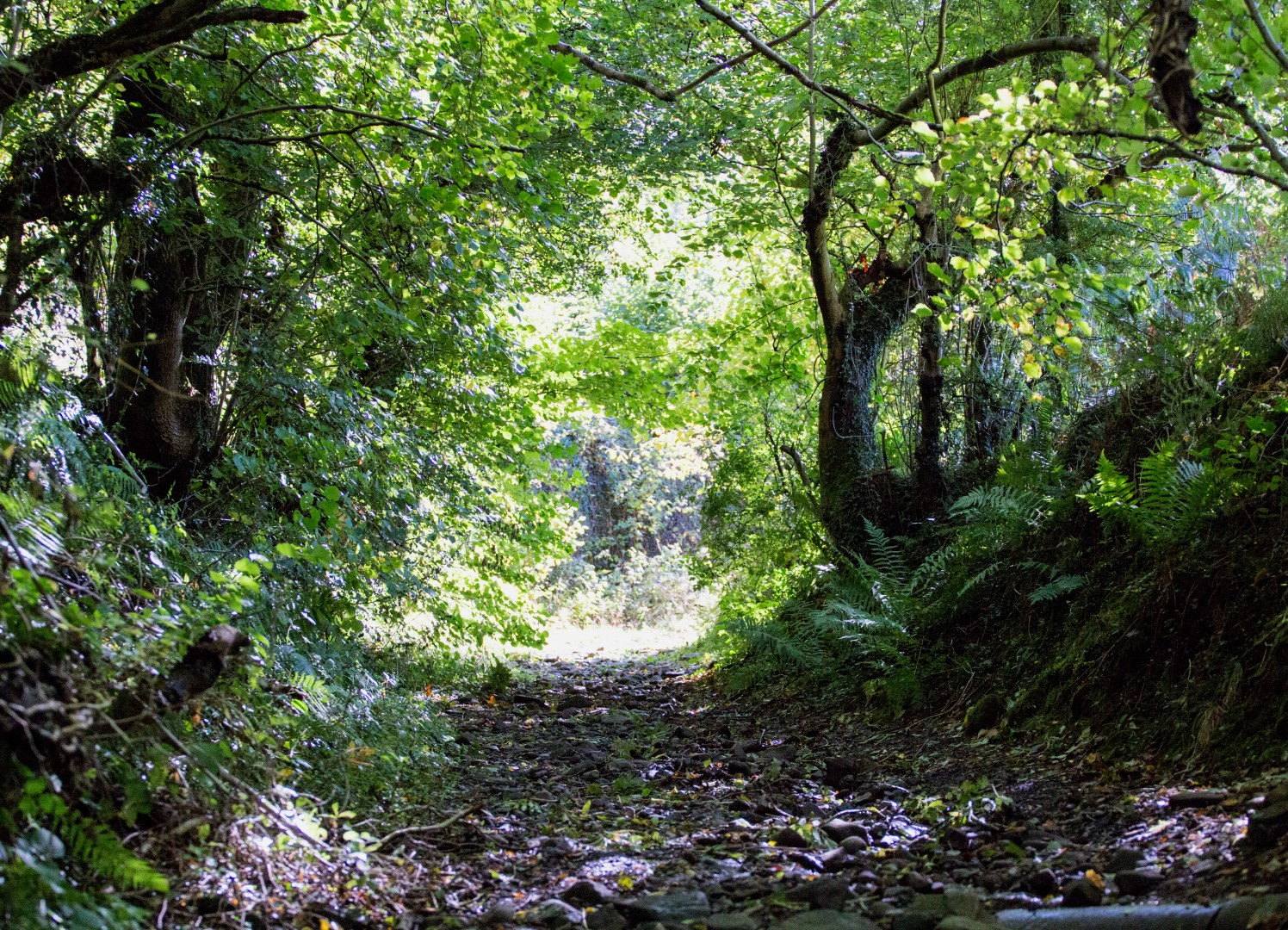 Biodiversity Offsetting Forest Path