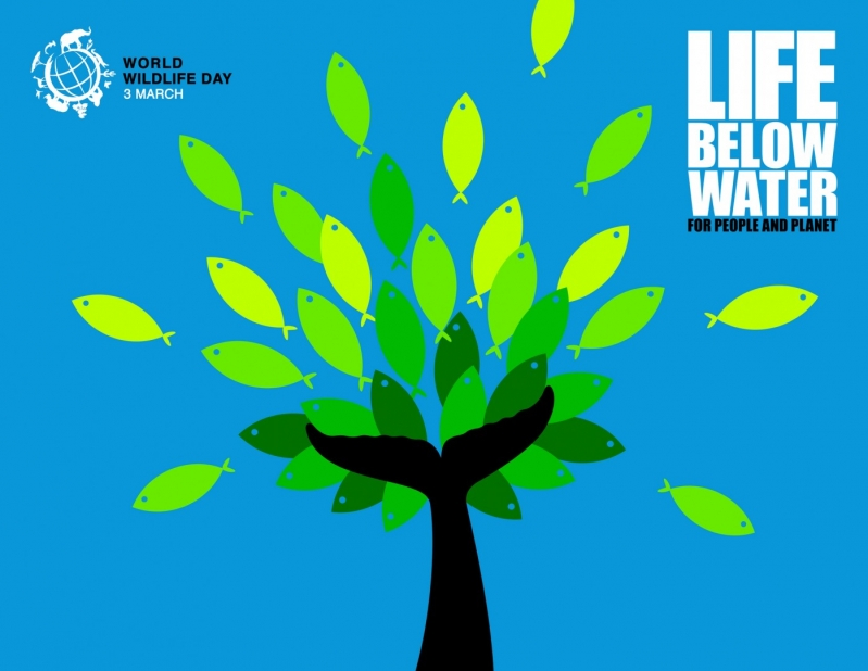 World Wildlife Day 2019 Life Below Water Poster Image