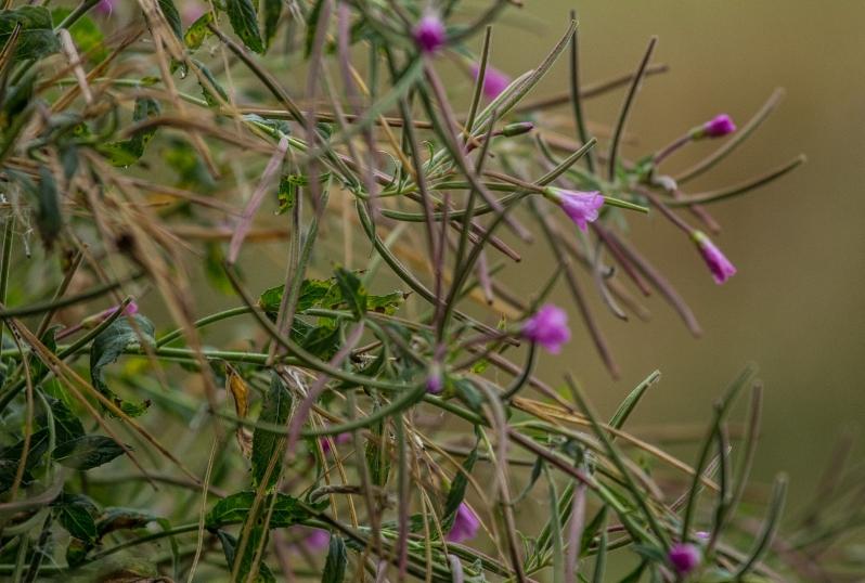 Biodiversity Offsetting