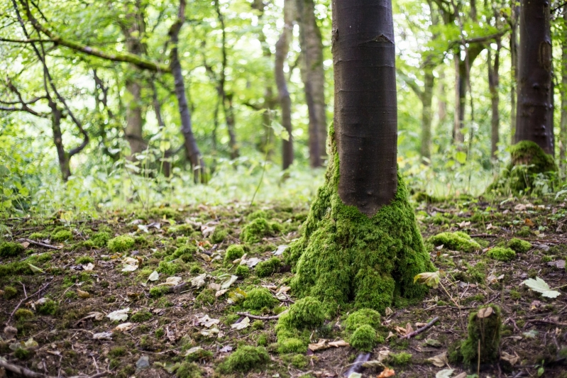 Biodiversity Offsetting Forest Floor