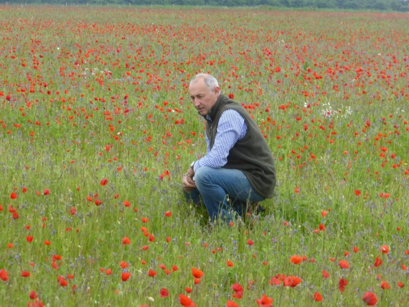 Wildflower Meadows Maintenance in the field