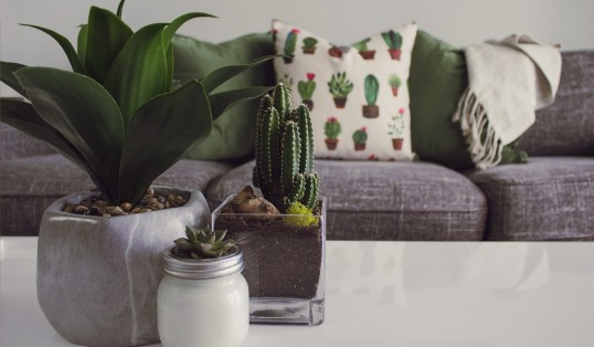 Selling your Home Designecologist Cactus and Print Cushions
