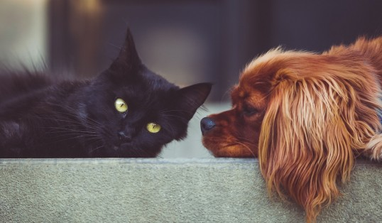 How to have a pet-friendly home King Charles Cavalier and Black Cat