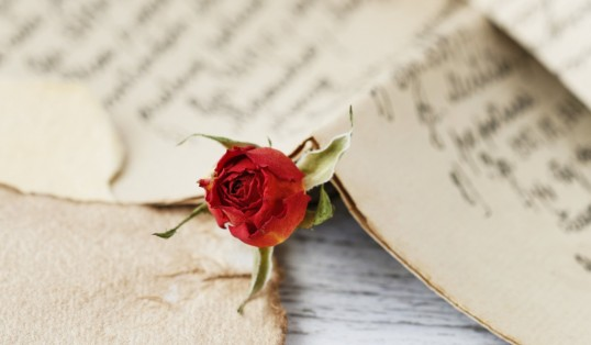 Valentines Day Red Rose Handwritten Love Letter
