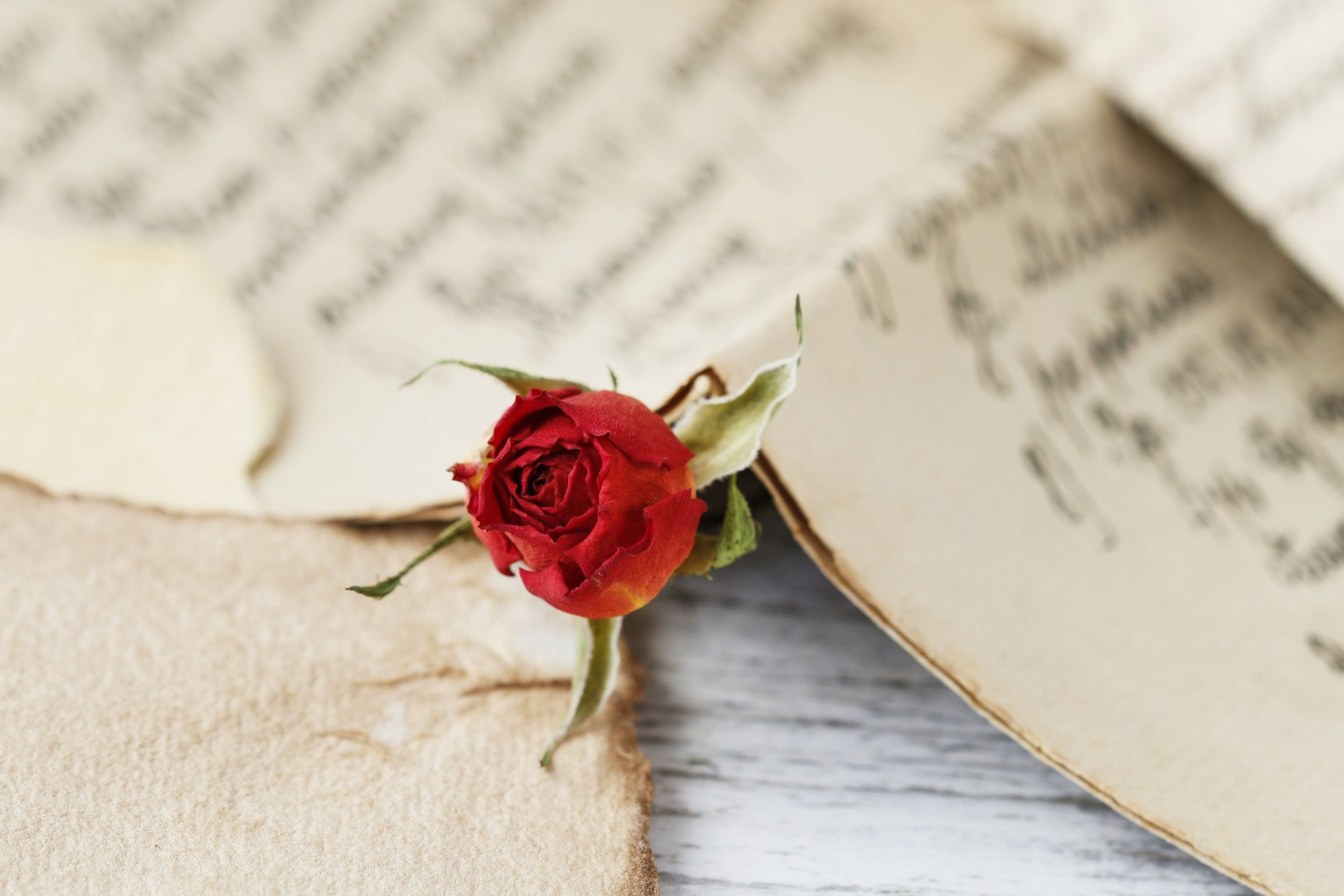 Valentines Day Red Rose Handwritten Love Letter