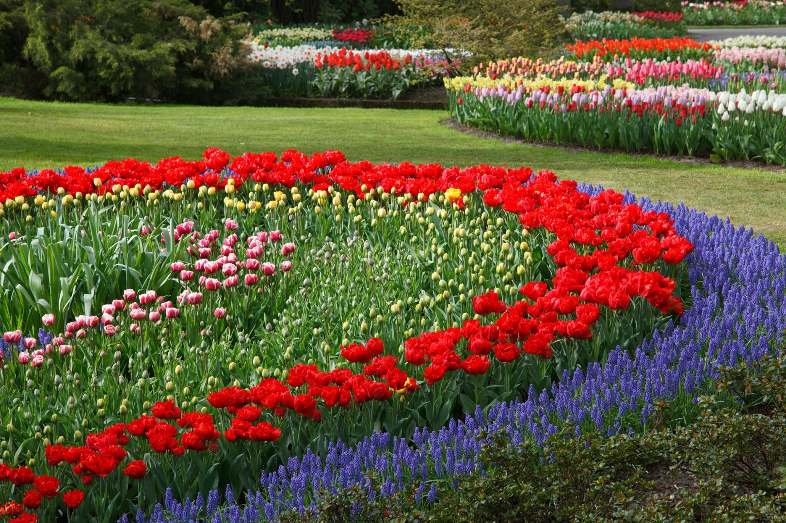 How to Design a Garden Chris Edgar Tulips